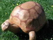 Tortoise by Curtis Hart