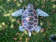 Top View of Sea Turtle by Diane Sarracino