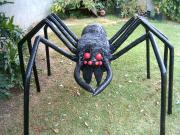 Giant Wolf Spider - Wolfee by Diane Sarracino