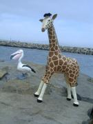 Annalisa the giraffe with Pieter the pelican by Diane Sarracino