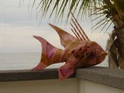 Hogfish by Sally Cherry