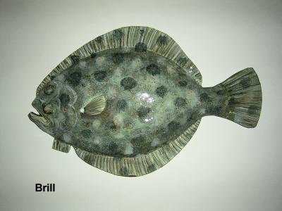 """Brill"" by Sue Baker"
