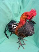 Rooster 3, right view by Scylla Earls