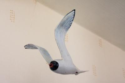 """Little Gull"" by David Osborne"